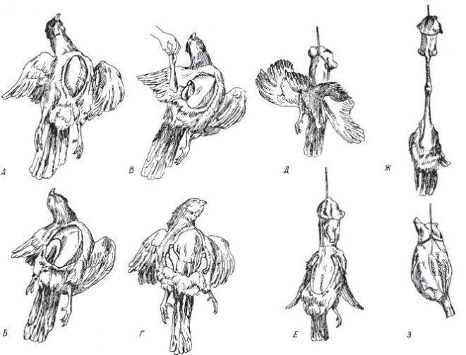 Схема снятие шкуры с птицы