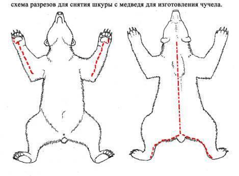 Снятие шкуры медведя со спины